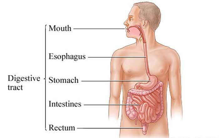 digestive tract infection smelly gas